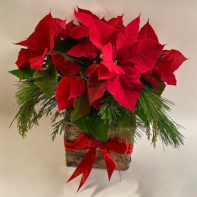 Winter Cheer from Valley Forge Flowers in Wayne, PA