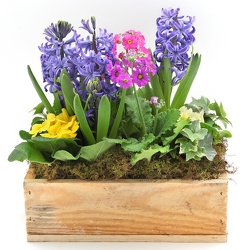 Fragrant Hyacinth Garden from Valley Forge Flowers in Wayne, PA