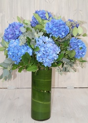 Just Hydrangeas from Valley Forge Flowers in Wayne, PA
